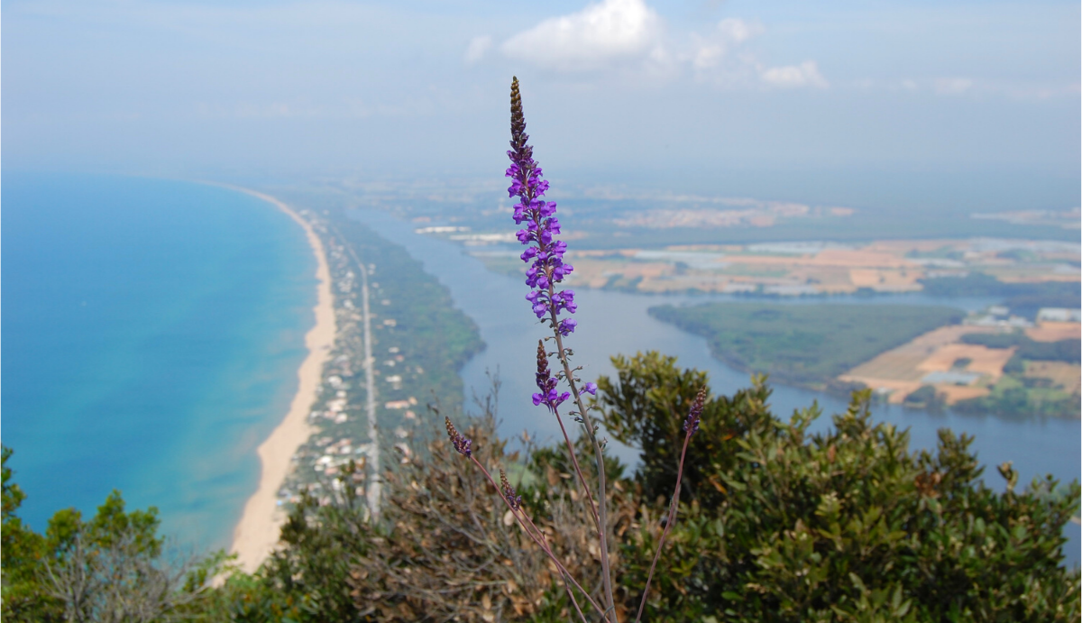 """Management Plans of the Special Protection Area """"Circeo National Park"""" and the included Sites of Community Importance"""