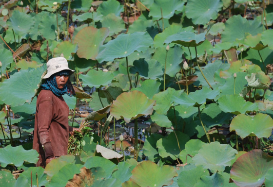 Technical support for sustainable financing of protected areas in Cambodia