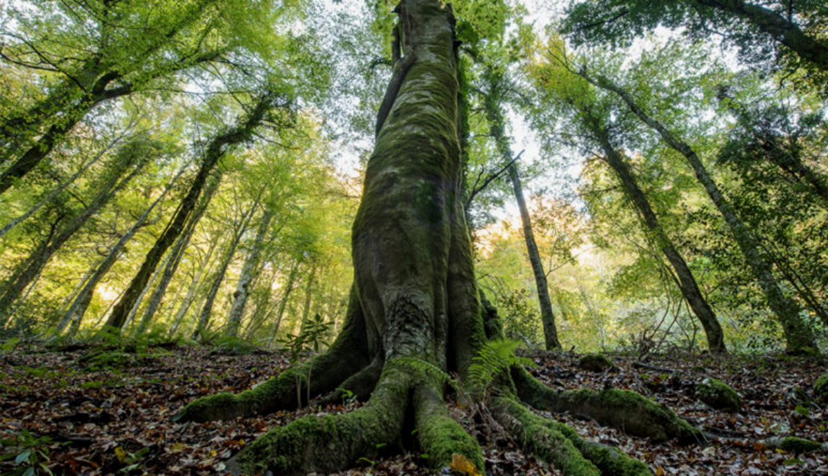 Preparation of 10 Management Plans for the Italian sites of the Ancient and Primeval Beech Forests of the Carpathians and Other Regions of Europe UNESCO Heritage Sites